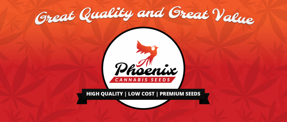 Great quality and great value - Phoenix Cannabis Seeds - High Quality | Low cost | Premium Seeds